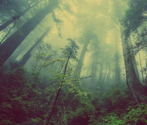 Dybt inde i en grøn let-tåget skov